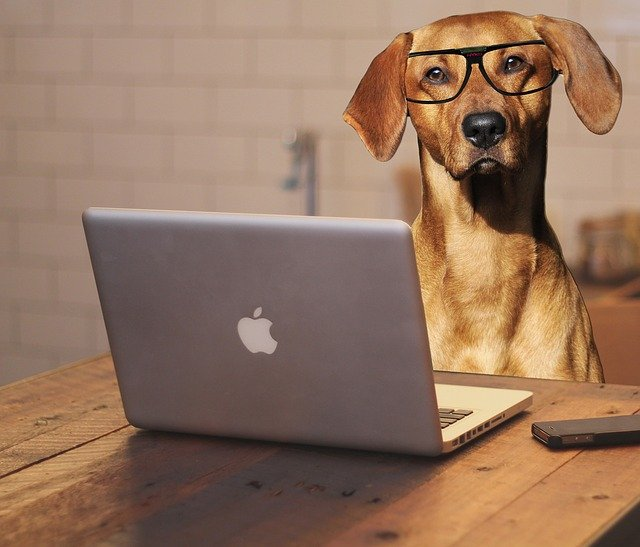 pes a brýle