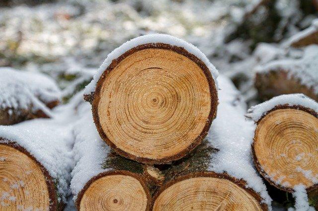 vytěžené dřevo před opracováním